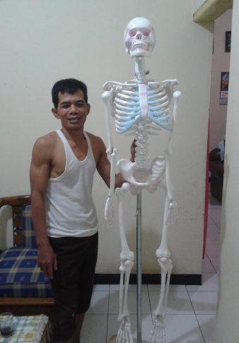 alat peraga anatomi, model kerangka manusia, model rangka manusia