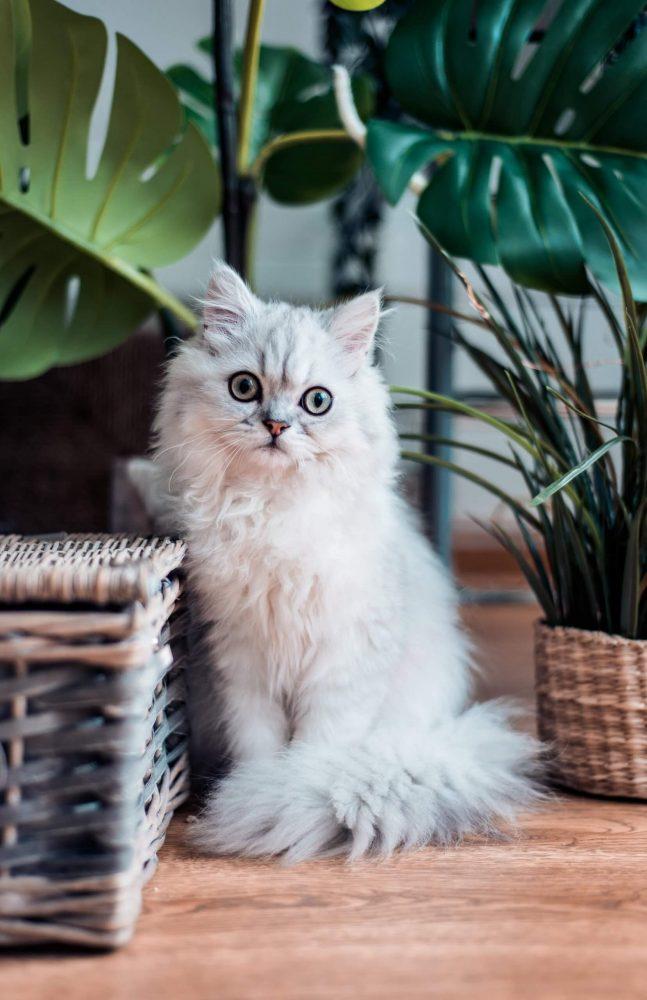 Nama Kucing Betina Lucu