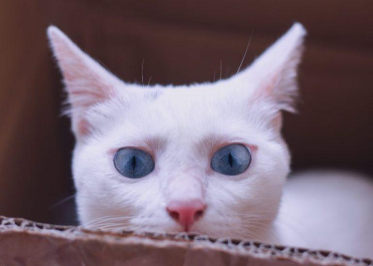 Paling Lucu Kumpulan Nama Kucing Betina Terlengkap Dan Terbaik