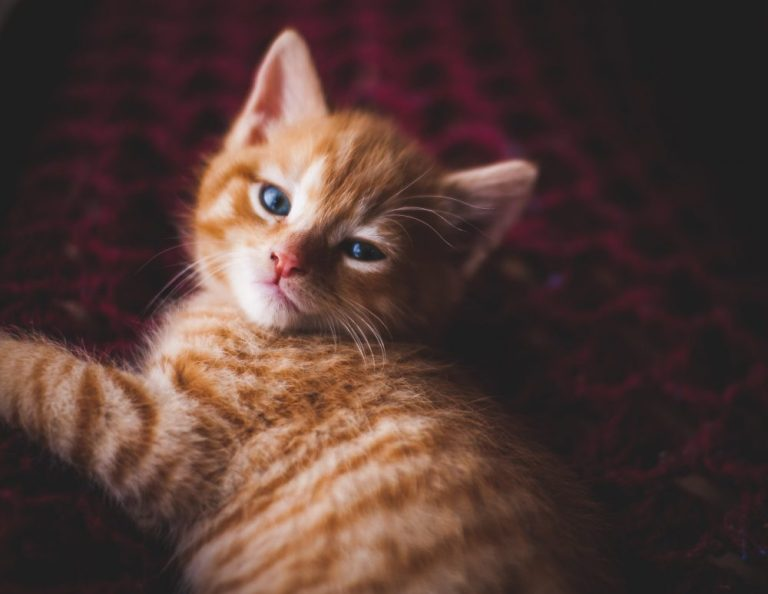 Nama Kucing Orange Korea
