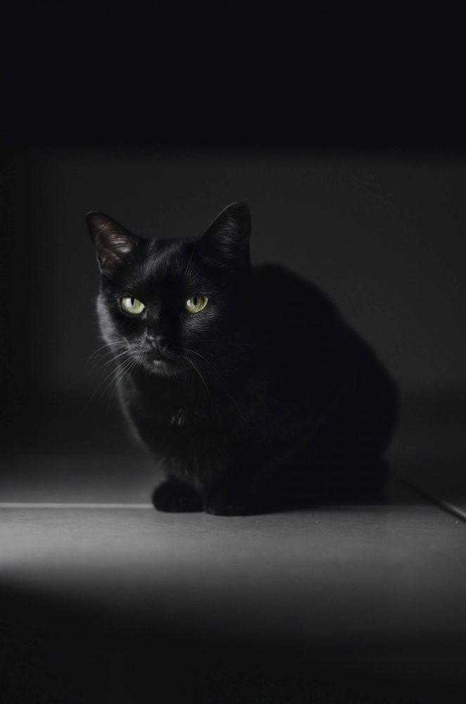 black cat on floor