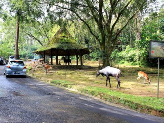 Taman Safari Indonesia - id.wikipedia.org