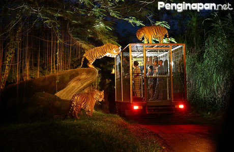 Harga Tiket Tour Malam Safari Night Di Taman Safari Indonesia