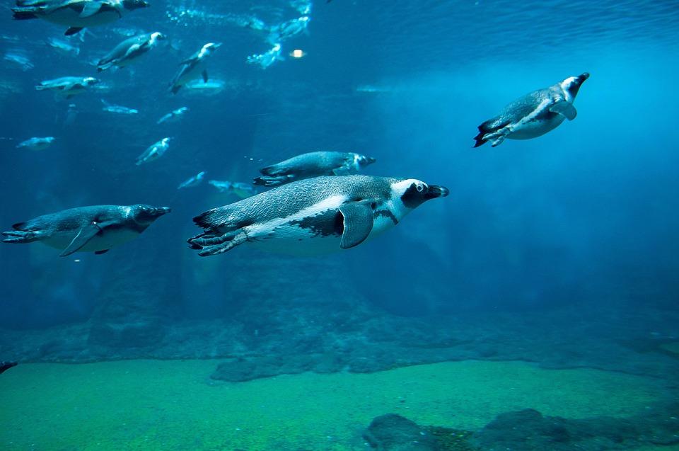 How Do Penguins Eat Penguins Blog