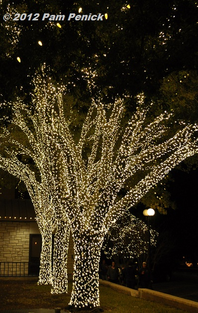 Johnson City Trees Light Up The Night At Christmastime