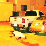 En Villas de los Maizales esquina con Villas de los Sahuaros, de la colonia Villas del Encanto, se registró la triple ejecución del pasado domingo, en donde nuevamente se evidenció la incapacidad policiaca. (Eliseo Zuloaga).