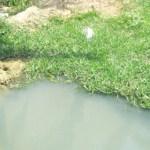 Agua pestilente que proviene de Residencial La Cima y que se encuentra almacenada en las afueras de esta zona residencial, provocando una grave contaminación ambiental (Lupita Gómez)