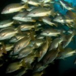 Invitan a poner atención particularmente, al hecho de que las flotas foráneas, por su interés en el recurso marino, no respetan las áreas naturales protegidas del estado, como lo son la Reserva de la Biósfera El Vizcaíno y el Parque Nacional Bahía de Loreto