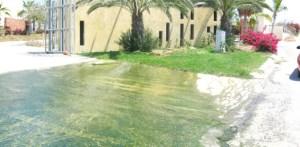 Finalmente y aunque en calidad de mientras, los derrames de aguas negras de Residencial La Cima, donde ya se tiene el proyecto de la nueva planta de tratamiento (Lupita Gómez)