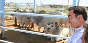 Rancheros de la zona sur del municipio de La Paz, indicaron que a pesar de las condiciones económicas limitadas en que se encuentran y que dificulta la crianza de su ganado, las autoridades estatales y municipales no les interesa su situación.