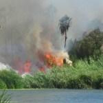 Casi dos horas después de iniciado el incendio tuvo arribo el Cuerpo de Bomberos de Cabo San Lucas, al llamado también acudieron elementos policíacos y de la fuerza naval.