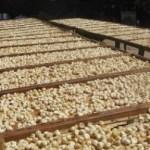 La calidad de la producción estatal de higo ha permitido que se comercialice hacia el continente asiático, lo que favorece en especial a los productores de Mulegé, dijo el delegado de Sagarpa, Alvaro Gomez Reynoso.