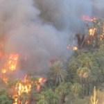La Conafor se mantiene en alerta ante el incremento desmedido de incendios de palmar.
