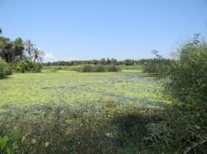 Lo que queda del espejo de agua del Estero San José, abandonado criminalmente por el Gobernador del Estado y su ex secretario general Luis Armando Díaz.