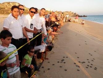 Inicia temporada de liberación de tortugas marinas