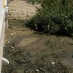 Aquí se observa lo que arroja al estero la planta de tratamientos que está en el centro de San José del Cabo.