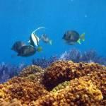 El biólogo marino Saúl González Romero, estudiante de Posgrado en Ciencias Marinas y Costeras de la UABCS, analiza el endemismo marino en el Golfo de California.
