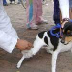 Hay que ser responsables y llevar a vacunar a perros y gatos.