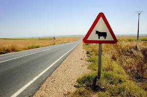 Encontró la muerte al chocar contra una vaca en carretera