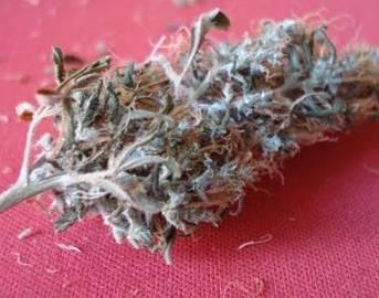 Agarraron a tres sujetos en posesión de marihuana y cristal