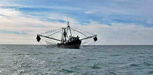Zarpan cruceros de investigación del CIBNOR
