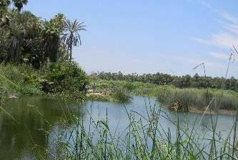 Realizarán campaña de concientización y rescate del Estero San José