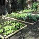 La creación de huertos orgánicos en las primarias ayudaría a inculcar en nuestros niños una cultura de producción y consumo de alimentos sanos.