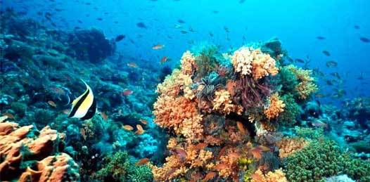 Es Cabo Pulmo la reserva marina más robusta del mundo revela el Centro Scripps
