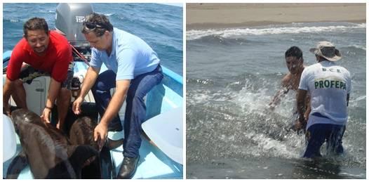Rescatan a 5 delfines varados en El Mogote