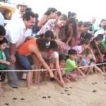 En Cabo San Lucas existen alrededor de 54 empresas con frentes de playa que participan en el proceso de conservación y los trabajos de campo asesorados por los integrantes de la red de protección a la tortuga marina.
