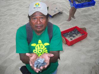 Ha liberado el Grupo Tortuguero de Todos Santos más de 800 pequeños quelonios este año