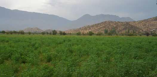 """Le """"entrará"""" SAGARPA con 900 mdp a la agricultura en """"zonas áridas"""""""