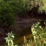 Los oasis atendidos se encuentran en La Soledad, Ángel de la Guarda, Las Ánimas, San Javier, San Hilario, San Miguel y San José de Comondú, impactando un total de 485 hectáreas.