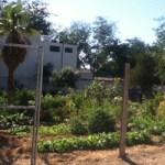 Los jardines comunitarios son áreas mantenidas por voluntarios los cuales aportan trabajo y tiempo para conservar estos espacios verdes, a cambio de beneficios como acceso a alimentos libres de químicos, realizar una actividad recreativa y de convivencia, entre otros.