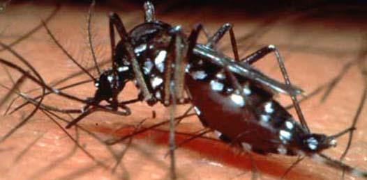 Sólo 12 casos de dengue se han registrado en el año
