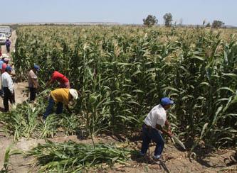 Destinará Financiera Rural 162 mdp al sector productivo local