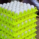 Ya ingresaron al país de 300 a 400 toneladas de huevo industrializado al país.