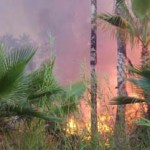 """Francisco Flores González, gerente estatal de la CONAFOR, precisó que de los 130 mil metros cuadrados de palmar arrasados por el fuego, 90 mil """"corresponden a arbolado adulto"""" y 40 mil a """"renuevo"""", además de confirmar que se trató de un incendio en el que se dio """"la intervención humana""""."""