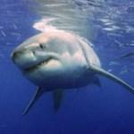 """Hasta que el 11 de septiembre un tiburón le despertó, rodeando el casco de la embarcación y golpeando contra el casco de la nave. """"Estaba guiándome a un barco de pesca"""", relató Toakai. """"Miré hacia arriba y allí estaba la popa de un barco y pude ver a la tripulación con los prismáticos mirándome""""."""