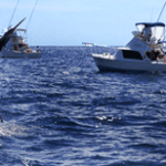 """""""Billfish, Los Cabos 2012"""""""