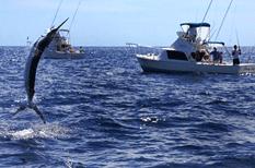 Inicia temporada de pesca