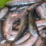 producción de sardina