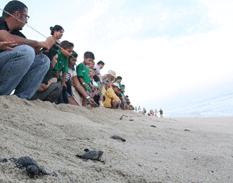 Concluye anidación de tortugas en la zona