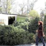 recolección de árboles