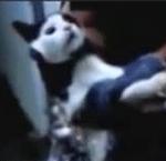 gato contrabandista
