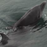 delfin bebe