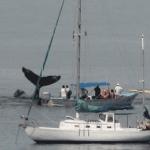 Liberan a ballena
