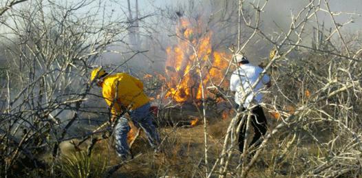 Arrasó el fuego 241 hectáreas de pastizales