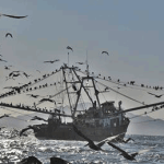 Pesca irregular