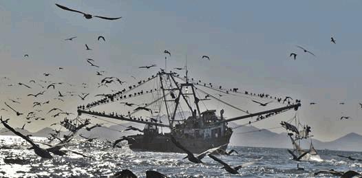 Irregular el 60% de la producción pesquera mexicana